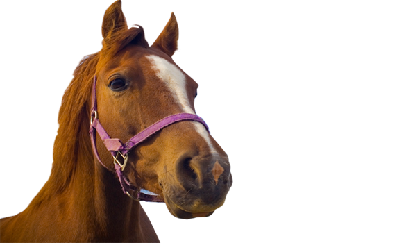 horseworld horse rescue rehabilitation and re homing charity
