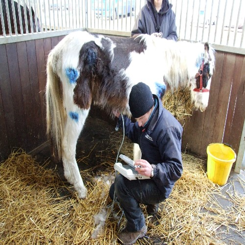 £100.00 Keep a Rescued Horse Wormed and Vaccinated for a year