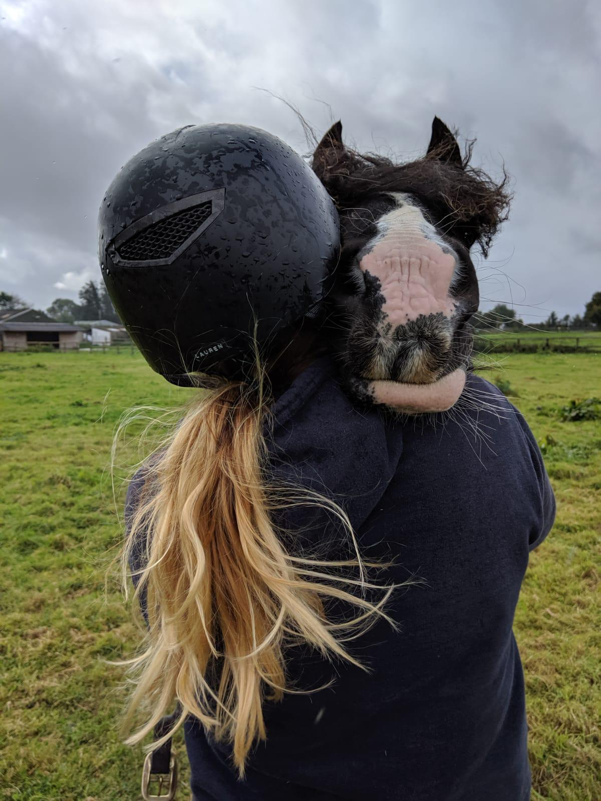 Husbandry Groom Weekends Horseworld